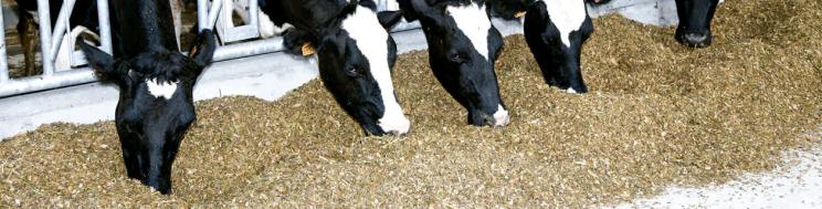 Milk+: La garantía de rentabilidad para el ganadero