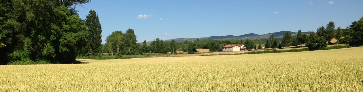 Arkeos: Una referencia para Europa en trigos galleteros