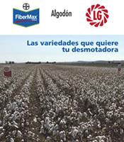 Catálogo Algodón