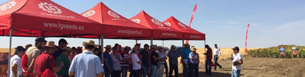 400 agricultores asistieron a la plataforma tecnológica de girasol de Semillas LG en Cuenca